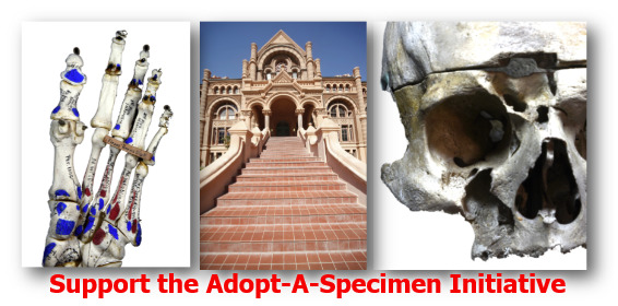More than 1,900 historic specimens are in danger of deterioration.  Adopt your specimen today!  Call 409-772-5714 for information.